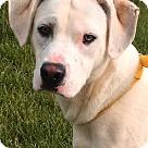 Adopt A Pet :: Casper