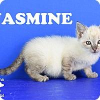 Adopt A Pet :: Jasmine - Carencro, LA
