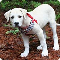 Adopt A Pet :: Deuce - Little Compton, RI