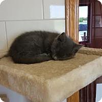 Adopt A Pet :: Azmi - Chippewa Falls, WI