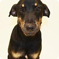 Adopt A Pet :: Vince - Brunswick, ME