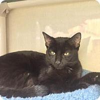 Adopt A Pet :: Bumper - Fort Collins, CO