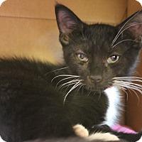 Adopt A Pet :: Faye - Medina, OH