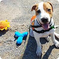 Adopt A Pet :: SPENCER - knoxville, TN