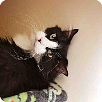 Adopt A Pet :: STYLEE - Murray, UT