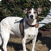 Adopt A Pet :: Sammy - Windsor, VA