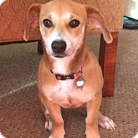 Adopt A Pet :: Elsa - Wharton, TX