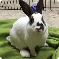 Adopt A Pet :: Barnaby - Woburn, MA