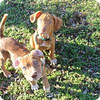 Adopt A Pet :: Walt and Disney - Norwich, CT