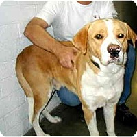 Adopt A Pet :: Rudy - Scottsdale, AZ