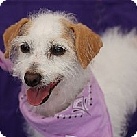 Adopt A Pet :: Princess - San Angelo, TX