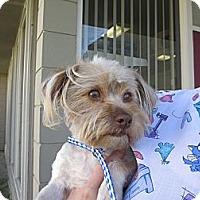 Adopt A Pet :: Greg - Fort Braff, CA