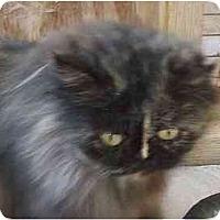Adopt A Pet :: Shantilly - Davis, CA