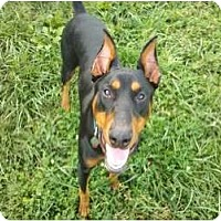 Adopt A Pet :: Sonny--adopted!! - New Richmond, OH