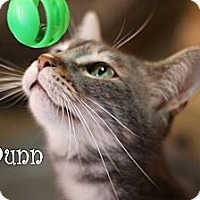 Adopt A Pet :: Dunn - Wichita Falls, TX