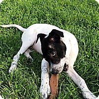 Adopt A Pet :: Rex - Philadelphia, PA