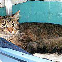 Adopt A Pet :: Margo - Dover, OH