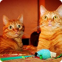 Adopt A Pet :: George & Gus **HALF PRICE ADOPTION FEE** - Overland Park, KS