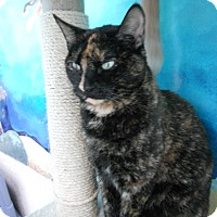 Adopt A Pet :: Megan - Newport Beach, CA