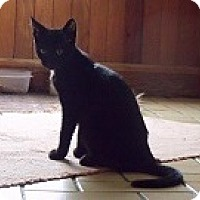 Adopt A Pet :: Bridgette - Lacona, NY