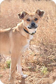 Shepherd (Unknown Type) Mix Dog for adoption in Midland, Texas - Art