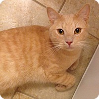 Adopt A Pet :: Lee - Tega Cay, SC