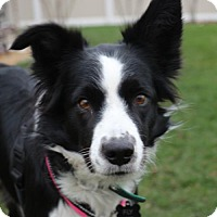 Adopt A Pet :: Fly - Highland, IL