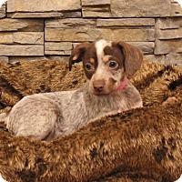 Adopt A Pet :: Tutu - Waldorf, MD