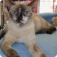 Adopt A Pet :: Sandrine - Walnut Creek, CA