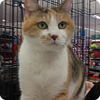 Adopt A Pet :: Cally - Redondo Beach, CA