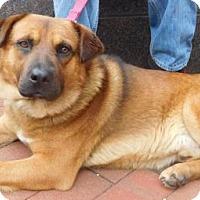 Adopt A Pet :: Bernie - Rockville, MD