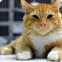 Adopt A Pet :: Ginger Jawn - Philadelphia, PA