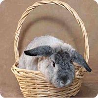 Adopt A Pet :: Rudy - Los Angeles, CA