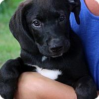 Adopt A Pet :: Maverick - Glastonbury, CT