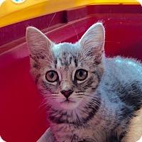 Adopt A Pet :: Chili - East Brunswick, NJ