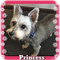 Adopt A Pet :: Princess - Sharonville, OH