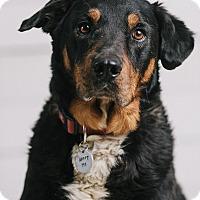 Adopt A Pet :: Hopper - Portland, OR
