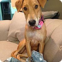 Adopt A Pet :: River - Huntley, IL