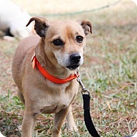 Adopt A Pet :: Woody - Ruston, LA