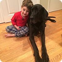 Adopt A Pet :: Cowboy Klaus - Alexandria, VA