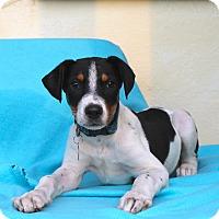 Adopt A Pet :: Cramer - Los Angeles, CA