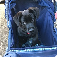 Adopt A Pet :: Ice BEAUTIFUL - Tunica, MS