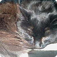 Adopt A Pet :: Buffington - N. Berwick, ME