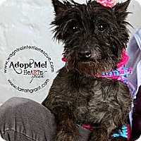 Adopt A Pet :: Jan - Omaha, NE