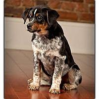 Adopt A Pet :: Ducky - Owensboro, KY