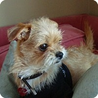 Adopt A Pet :: LOLA - ADOPTION PENDING - Los Angeles, CA