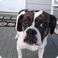 Adopt A Pet :: Mika - Cumberland, MD