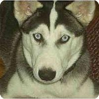 Adopt A Pet :: Tristan - Belleville, MI