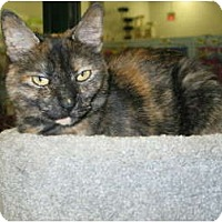 Adopt A Pet :: Jackie - West Dundee, IL
