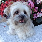 Adopt A Pet :: AIKO